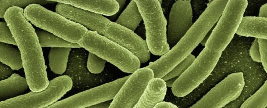 Bacille gram négatif : prévention, surveillance et épidémiologie
